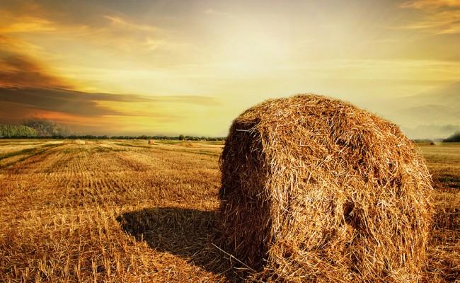 Harvest Concept